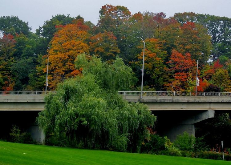 A fabulous fall day in Southern Ontario. Fall Colors Trees Autumn Bridge - Man Made Structure Fall Nature No People Outdoors Tree Autumn Colours Autumn Leaves Autumnbeauty Autumn🍁🍁🍁