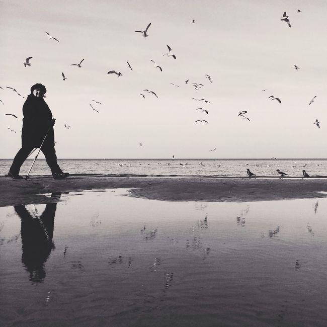 Seagulls Bwbeach Streetphoto_bw IPSWater Beach