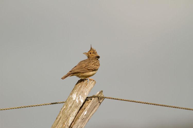 Bird perching on pole against clear sky