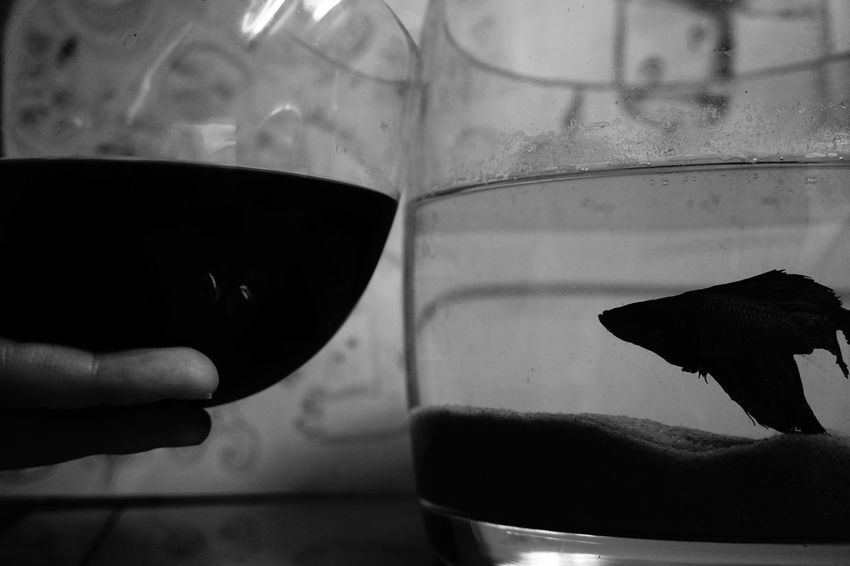 Wine Moments Fish Blackandwhite Water