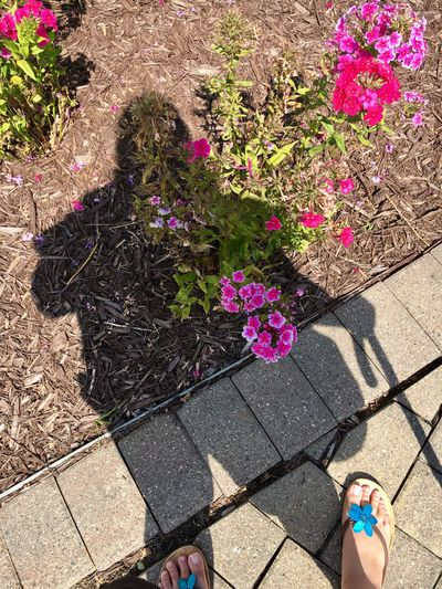 Sunlight High Angle View Flowering Plant Flower Shadow Plant Nature Real People Human Body Part Day Standing Human Leg People Footpath Beauty In Nature Outdoors Human Foot