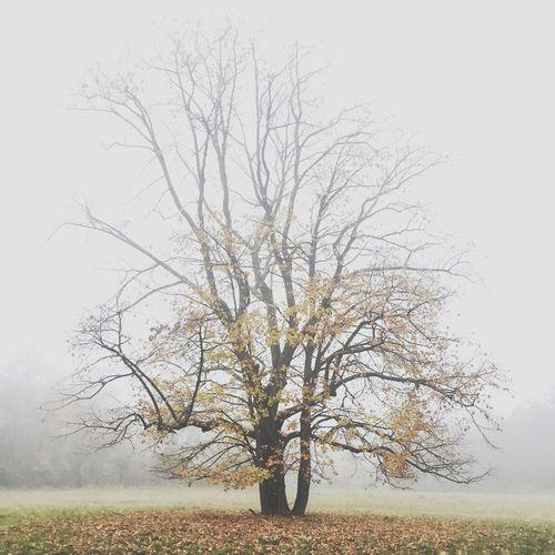 Showcase: November IPS2015Trees