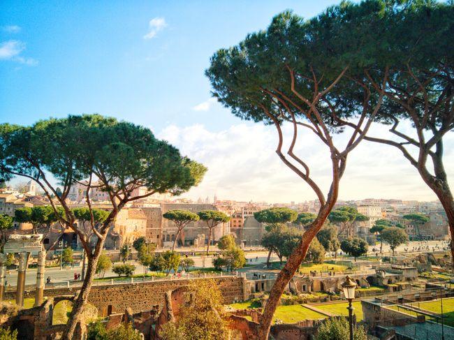 View to Forum Romanum in Rome Rome Italy Europe Forum Romanum Palatine Ancient Roman Architecture Ancient Architecture Temple Tree Rural Scene Irrigation Equipment Agriculture Blue Sky Landscape Tranquil Scene