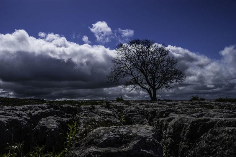 Lone tree on