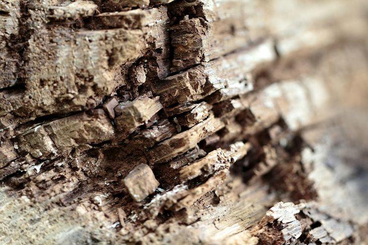 Close-up of peeled wall