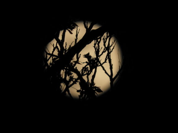 Branch Silhouette No People Outdoors Fullmoon Supermoon FoolMoon Astronomy Moon Beauty In Nature Tranquility