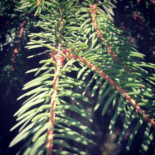 Summer Wood Green
