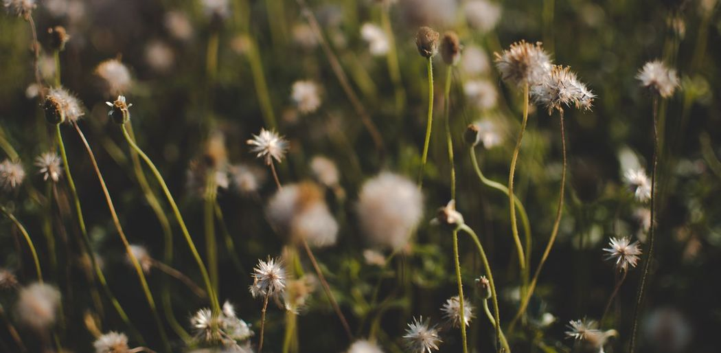 Plant Growth Flower Beauty In Nature Flowering Plant Fragility Vulnerability  Close-up Freshness Nature Day Field Tranquility Selective Focus Land Plant Stem Focus On Foreground No People Sunlight Outdoors