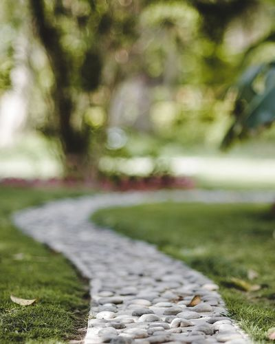 you always have a choice Garden Path Ornamental Garden Flowerbed Formal Garden Japanese Garden Lavender Colored Hedge Black-eyed Susan Stepping Stone Blooming Pollen Flower Head Petal Lush - Description Pansy Botanical Garden Topiary In Bloom