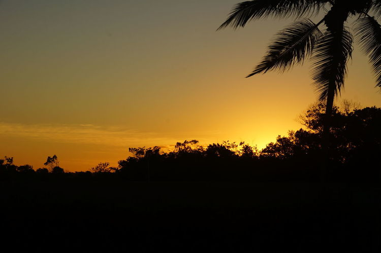 Beauty In Nature Brasil ♥ Nature No People Orange Color Outdoors Porto Seguro, Bahia Silhouette Sky Sunset Tree