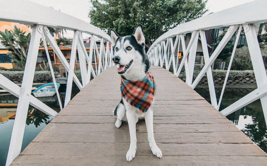 Portrait of dog sitting on footbridge