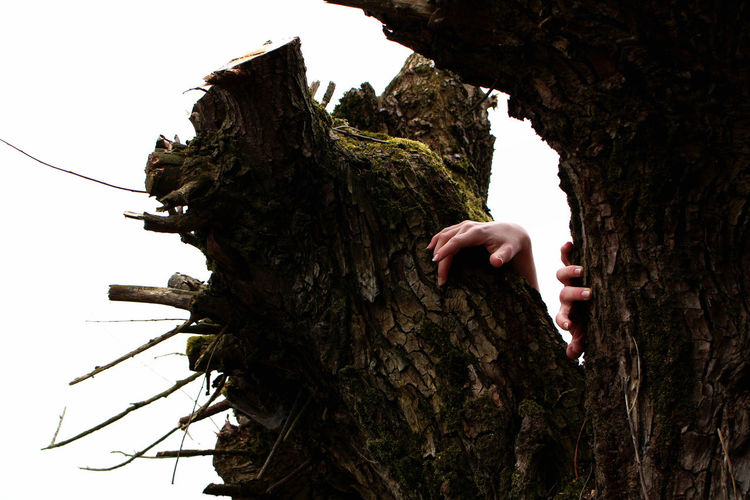 Man tree trunk