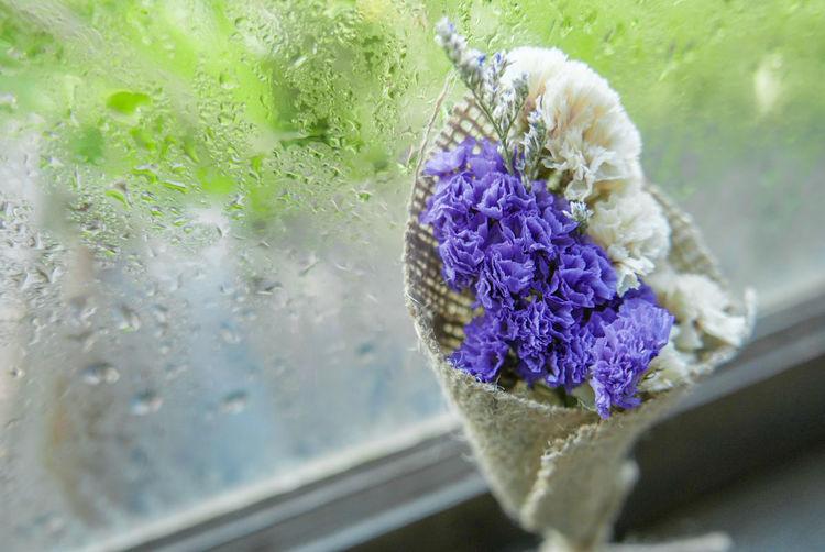 Close-up of wet purple flower on glass window