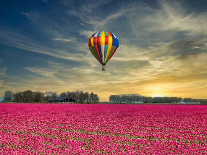 Multi colored hot air balloons on field against sky