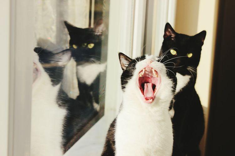 EyeEm Mycat Eyeemcats MyCatMyLove Mycat! EyeEm Best Shots EyeEmAnimalLover Domestic Animals Domestic Cat Mycats Mycatsareawesome Sneezing Cat