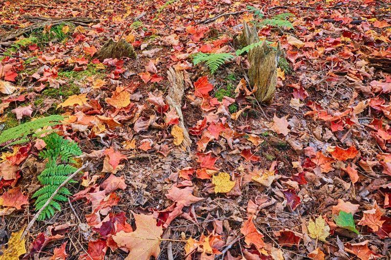Tree Fall