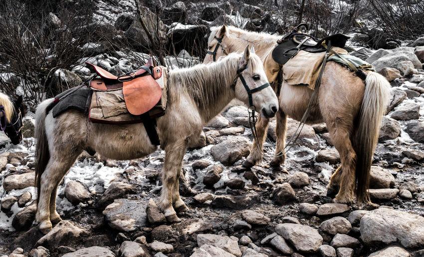 Horses standing on rock