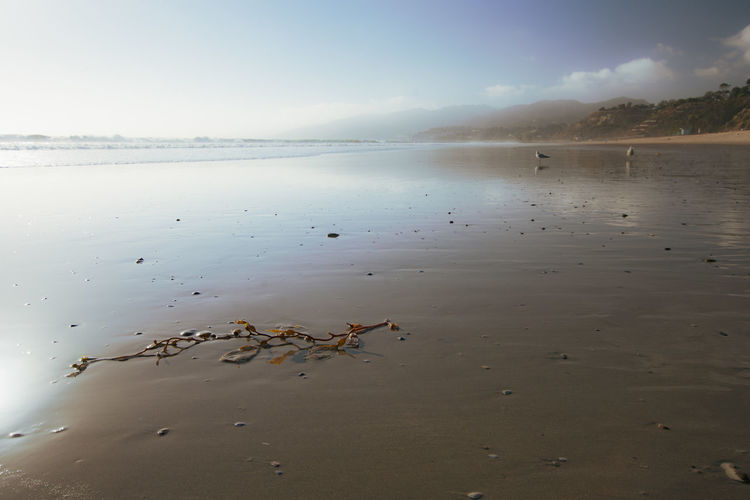 Seaweed Beach Beauty In Nature Bird Cloud - Sky Day Mountain Nature No People Non-urban Scene Outdoors Pacific Ocean Sand Scenics - Nature Sea Seaweed At The Beach Sky Tranquil Scene Tranquility Water Wide Angle