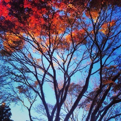 Blue Autumn Red Memories
