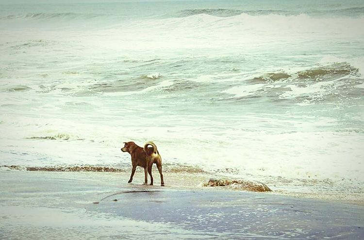 Lone Ranger Sea Beach Water Nature Sand Domestic Animals Wave Shore Mammal One Animal Sky Pets Scenics Beauty In Nature Outdoors Day Dogs Dog❤ Dogslife Long Goodbye