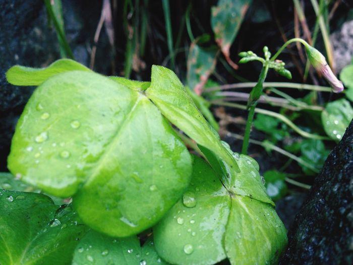 Taking Photos Enjoying Life Green Rain Drops Nature Hello World Flowers