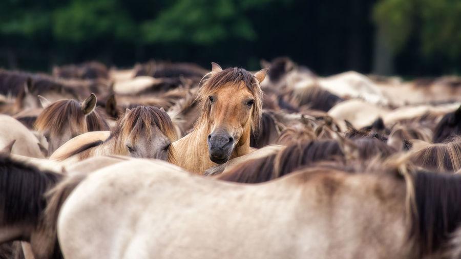 Wilpferde im Merfelder Bruch bei Dülmen. EyeEmNewHere, Animal Themes Close-up Day Domestic Animals Livestock Mammal Nature No People Outdoors