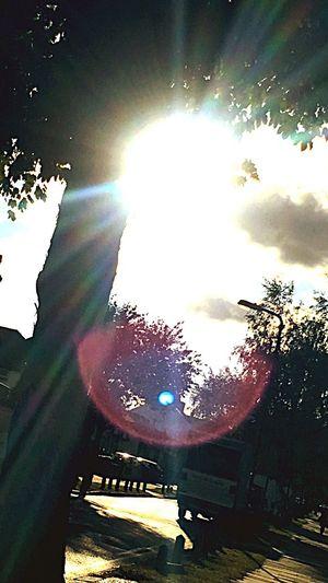 Sunlight Sunbeam Sky Lens Flare Outdoors Tree Sun Day Nature First Eyeem Photo