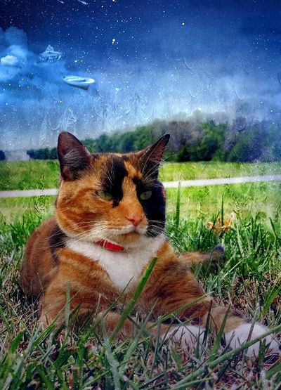 This is Becky. Catoftheday Cat♡ Calico Cat Cat Outdoors Toolwizphotos EyeEm Gallery EyeEm Best Edits
