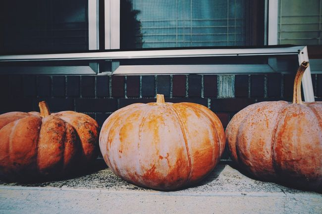 Pumpkins Better Together Daily Life EyeEm Korea