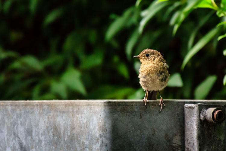 Wren bird sitting on trash bin