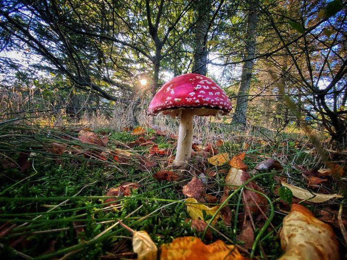 Mushroom growing on field