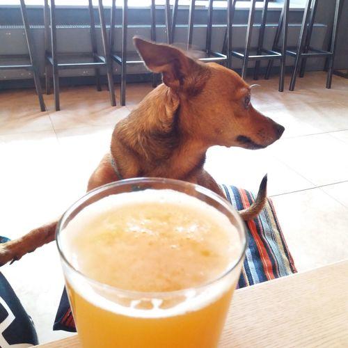 High angle view of a dog on table