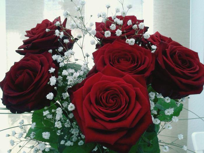 Flower Collection La Vie En Rose Flowerporn 🌷 Flowers 🌹 Love ♥ Red Roses Flowerlovers EyeEm Flower Thank You ❤ Rose🌹