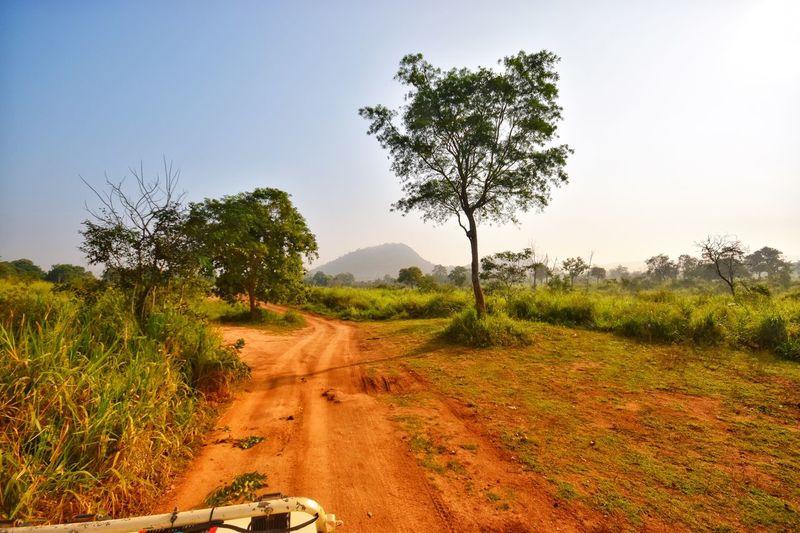 Sri Lanka Plant Tree Sky Growth Tranquility Landscape Beauty In Nature