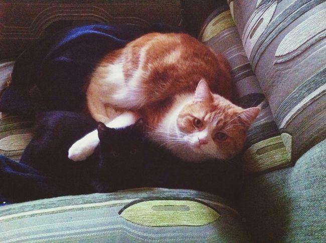 Cats котики Lis