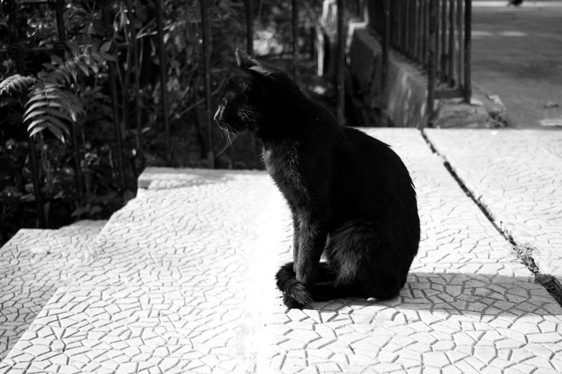 Animal Themes One Animal Cats Of EyeEm Cats Cat Wild Cats Blackandwhite Photography Black & White Black And White Photography Black And White Black Cat Is Just So Beautiful. Black Cats Are Beautiful Black Cats Thinking Cat