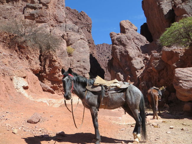 Ancient Civilization Animal Themes Arid Climate Bolivia Brown Damaged Desert Domestic Animals Geology Horse Horse Riding Mammal Mountains Old Ruin Physical Geography Ride Rock Rock Formation Rocky Mountains Rough Stone Stone Wall Textured  TUPIZA The KIOMI Collection