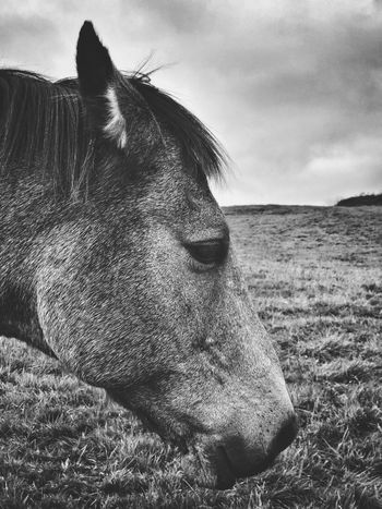 Why the long face? EyeEm Selects One Animal Animal Themes Domestic Animals Mammal Livestock Animal Head  Field Close-up Day No People Grass Outdoors Nature Sky Horse Courtmacsherry Wild Atlantic Way Cork Ireland
