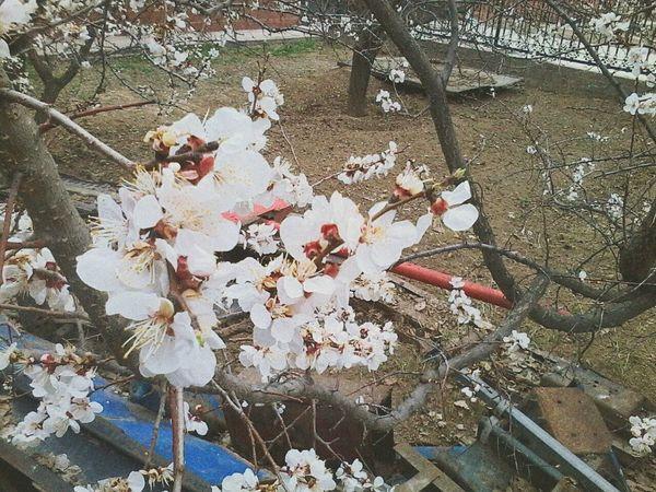 Весна💐🌷🌿 деревья цветы 😚 Тараз