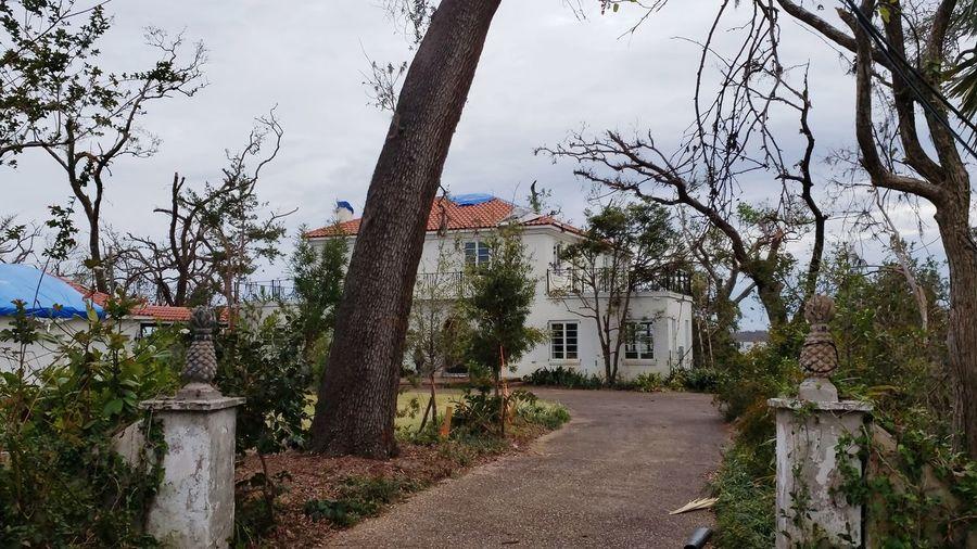 Tree Sky Building Exterior Architecture