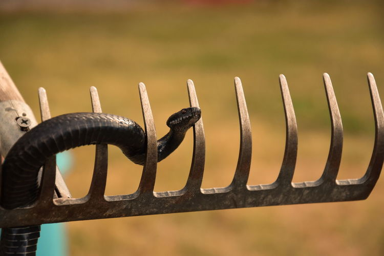 Close-up of snake on metal
