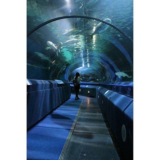 Good day at Blue Planet Aquarium with @alexandrapugh Blueplanetaquarium Underwater Marineanimals Sealife Dayout Butdaditssharkweek