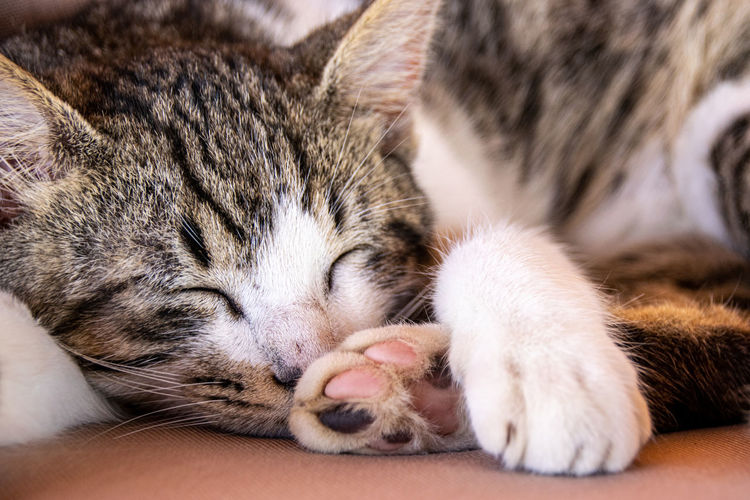 Paw pad as tabby cat sleeps Adorable Alert Animal Animal Print Cat Cat Paw Cats Claw Color Cute Design Dog Dog Paw Domestic Feline Foot FootPrint Footstep Fur Hunter Isolated Kitten Kitty Leg Mammal Nature Palm Pattern Paw Paw Prints Pawprint Paws Pet Pet Shop  Pets Portrait Puppy Relax Relaxation Silhouette Tabby Tame Texture Toe Track Trail Wallpaper Whiskers Wildlife Yawn