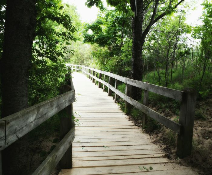 Pathway Healing Soothing Nature Relaxing Relaxation Natures Medicine