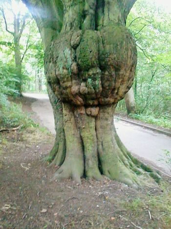 """Old Man Pumpkin Tree"" in Leeds, as it's been named. Old Tree Strange Nature Outdoors WoodLand Wood Misshaped Inanimate Character Tree"