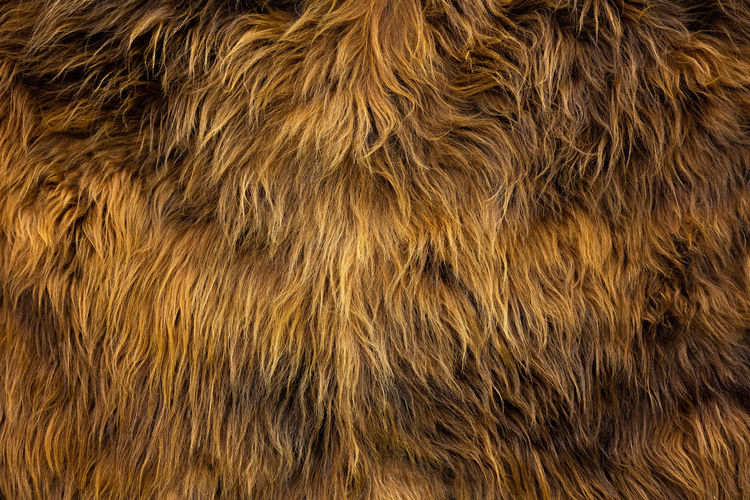 Hairy Hairy  Copy Space Soft Abstract Animal Animal Hair Animal Skin Animal Themes Animals Background Background Photography Background Texture Backgrounds Brown Close-up Extreme Close-up Full Frame Fur Pattern Structure Texture Textured  Textured Effect EyeEmNewHere