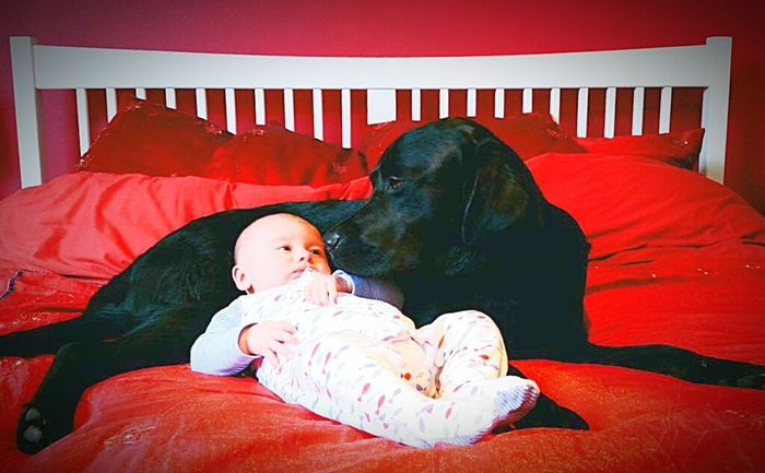 Love Without Boundaries Brotherly Love Baby Dog Boys Brothers