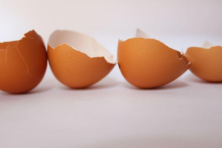 Chicken White Background Easter Eggs Easter Hatched Broken Cracked Eggshell Eggshells Egg Row