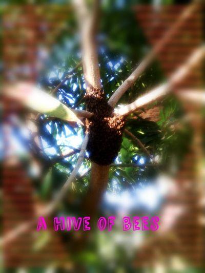 Sarang lebah Happy :) Hanging Out Maduraisland