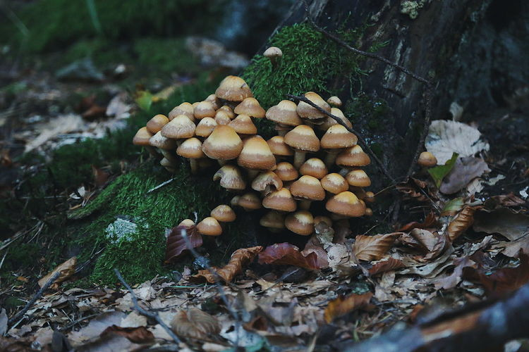 Clusters of inedible mushrooms Beauty In Nature Mushroom Hunting Foraging Landscape Tree Trunk WoodLand Nature Forest Forest Walk Outskirts Mushrooms Mushroomphotography Autumn Autumn Collection